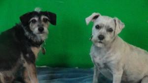 Grady and Olivia (2)