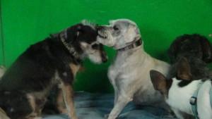 Grady and Olivia (4)