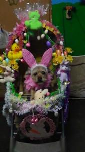 crazy wabbit!