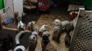 dogs in daycare shot